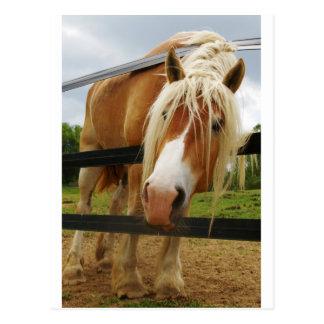 Belgisches Entwurfs-Pferd, Karotten erhalten? Postkarte