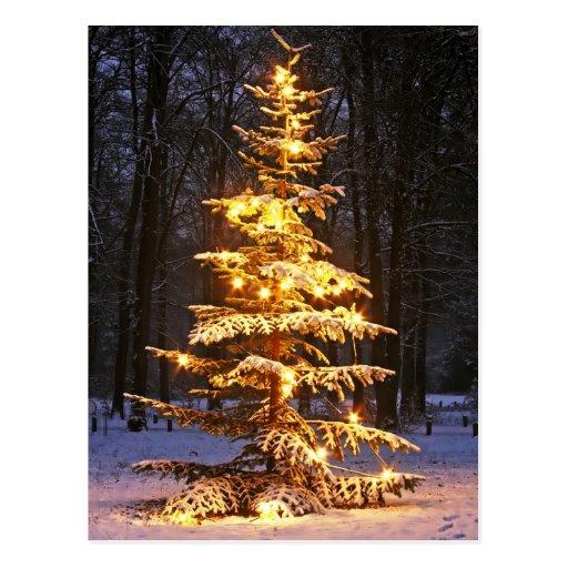 belichteter schneebedeckter weihnachtsbaum im holz. Black Bedroom Furniture Sets. Home Design Ideas