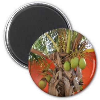 Belize-Palme Runder Magnet 5,1 Cm