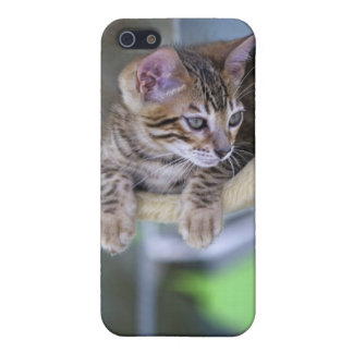 Bengal Cat Schutzhülle Fürs iPhone 5