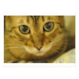 Bengalische Katze Postkarte