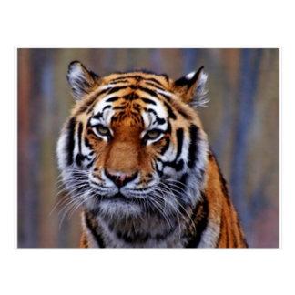 Bengalische Tiger-Postkarte