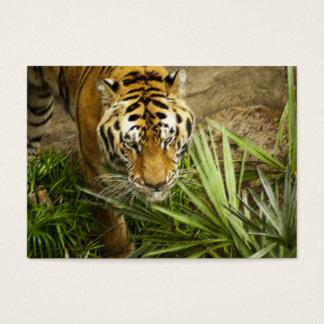 Bengalischer Tiger - ACEO 2 Visitenkarte