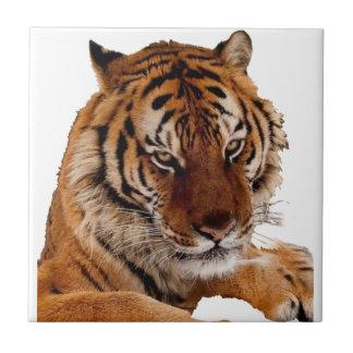 Bengalischer Tiger Fliese