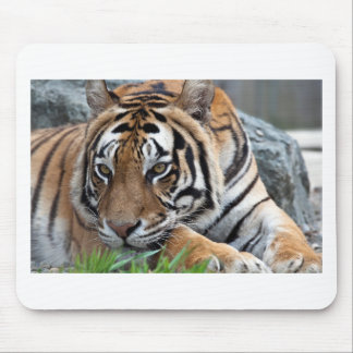Bengalischer Tiger im Gras Mousepad