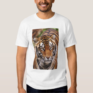 Bengalischer Tiger, Panthera der Tigris Shirts