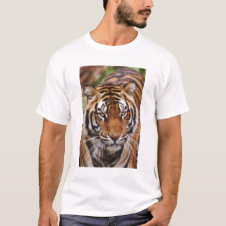 Bengalischer Tiger, Panthera der Tigris T-Shirt