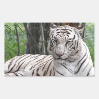 Bengalischer weißer Tiger Rechteckiger Aufkleber