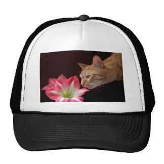 Bengalisches Katzen-Amaryllis jjhelene Retrokultcap