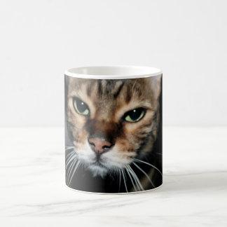 Bengalisches Katzen-Gesichts-Weiß Kaffeetasse