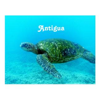 Berechnete Schildkröte Antiguas Falke Postkarte