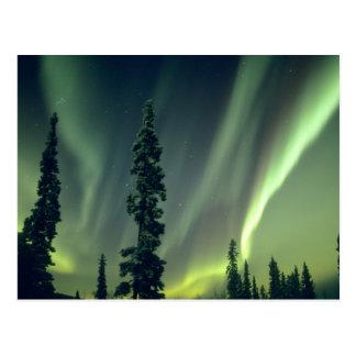 Bereich USA, Fairbanks, Mittelalaska, Aurora Postkarte
