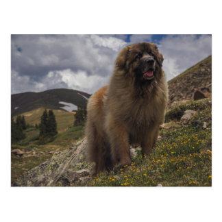 Berg Leonberger Postkarte