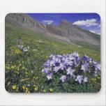 Berge und Wildblumen in der alpinen Wiese, blau Mousepads