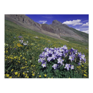 Berge und Wildblumen in der alpinen Wiese, blau Postkarte