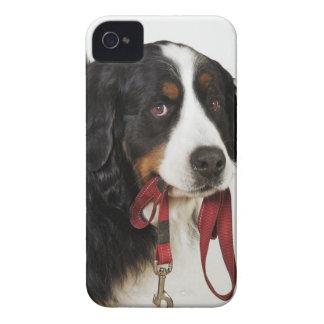 Bernese Gebirgshund (Berner Sennenhund) iPhone 4 Etuis