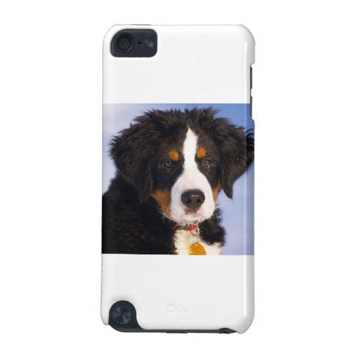 Bernese Gebirgshund - niedliches Welpen-Foto