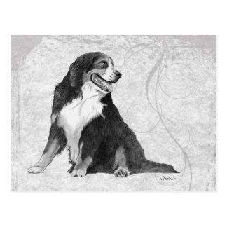 Bernese Gebirgshund Postkarte