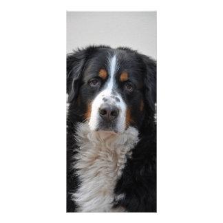 Bernese Gebirgshundeschönes Foto-Lesezeichen Werbekarte