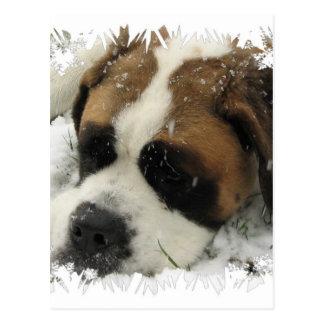 Bernhardiner-Hundepostkarte Postkarte