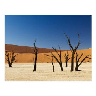 berühmtes Deadvlei mit toten Bäumen, Wüste 3 Postkarte