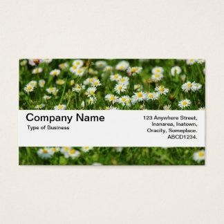 Beschaffenheits-Band V2 - Gänseblümchen-Wiese Visitenkarte