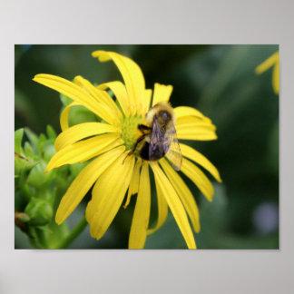 BestäubenBlume der Biene Poster