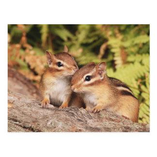 Beste Freund-BabyChipmunks Postkarte