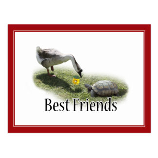 Beste Freunde - die Schildkröte u. die Gans Postkarte