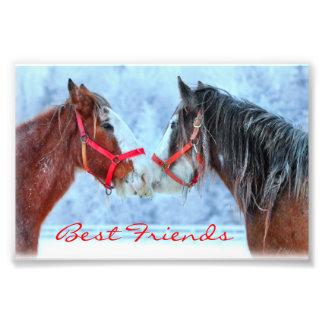 Beste Freunde Photodrucke