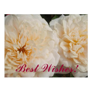 Beste Wunsch-Blumen Postkarte