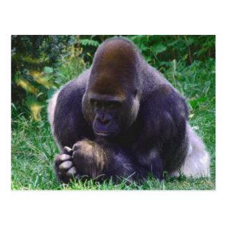 Betende Gorilla-Postkarte