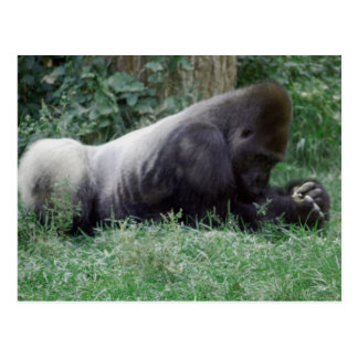 Betende Gorilla-Postkarte Postkarte