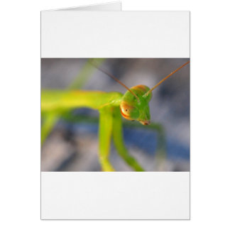 Betender Mantis Karte