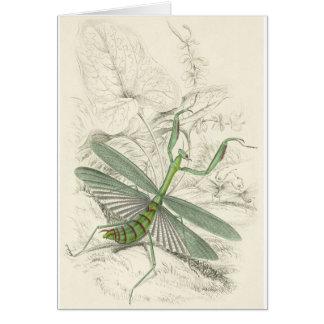 Betender Mantis, Mantis Religiosa Karte