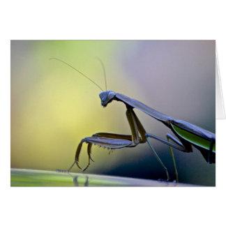 Betender Mantis Notecard Karte