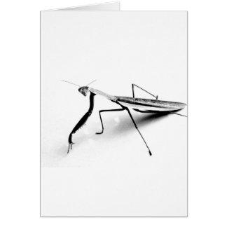 Betender Mantis-Sammlung Karte