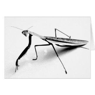 Betender Mantis-Skizze Karte