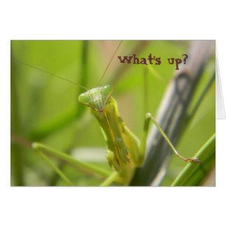 Betender Mantis - was ist oben? Karte