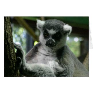 Betrachten eines Lemur Karte