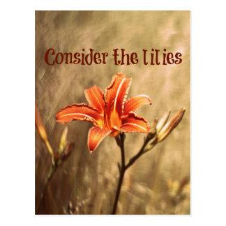 Bibel-Vers: Betrachten Sie die Lilien Postkarte