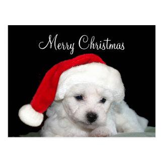 Bichon Frise Weihnachten Postkarte