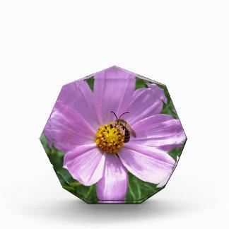Biene auf Blume Auszeichnung