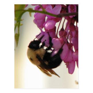 Biene auf einer Redbud Blüte Postkarte