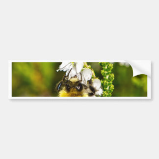 Biene auf glücklicher weißer Heide Autoaufkleber