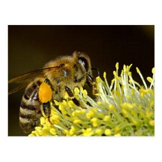 Biene bei der Arbeit Postkarte