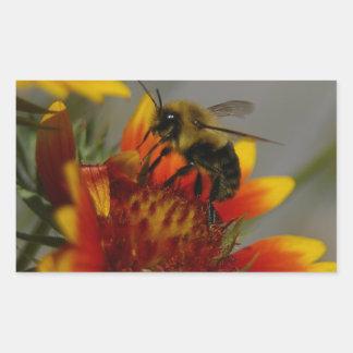 Biene, die auf einer Blume herumsucht Rechteckiger Aufkleber