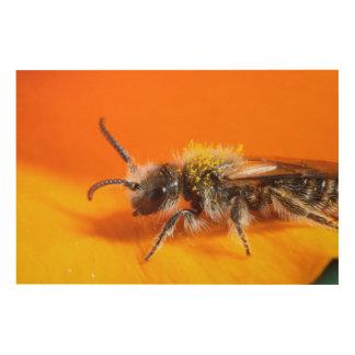 Biene, die eine Blume bestäubt Holzwanddeko