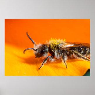 Biene, die eine Blume bestäubt Poster