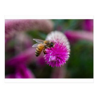 Biene gefüttert - Postkarten